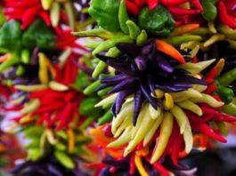 Три растения, которые лечат почти всё