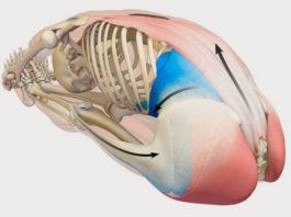 Почему нельзя растягивать мышцы, пока не посмотрели это видео