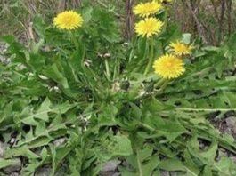 Всего 1 лист этого растения может спасти вашу жизнь!