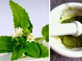 Высокий уровень сахара, аппетит, зубной налёт устранит это растение!