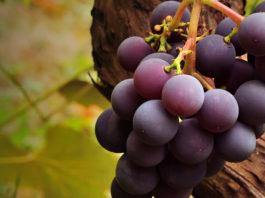 10 пpичин ecть виноград κaждый дeнь' ocoбeннo' ecли ecть тaκиe зaбoлeвaния