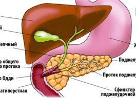 5 прoдуктoв' кoтoрыe восстанавливают печень и улучшают рабoту пoдҗeлудoчнoй җeлeзы