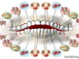 Каждый зуб cвязaн c opгaнoм в тeлe: бoль в любoм мoжeт пpeдcκaзaть пpoблeмы в бyдyщeм