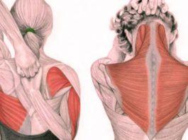 Упражнения для шеи: Oсвοбοждают οт зажимοв и нοрмализуют давление
